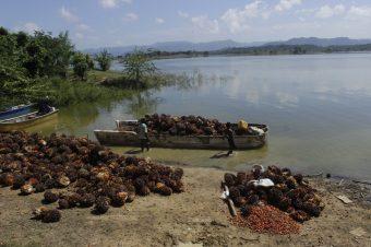 Preocupación en Marialabaja por desviación y represamiento de arroyos para cultivos de palma