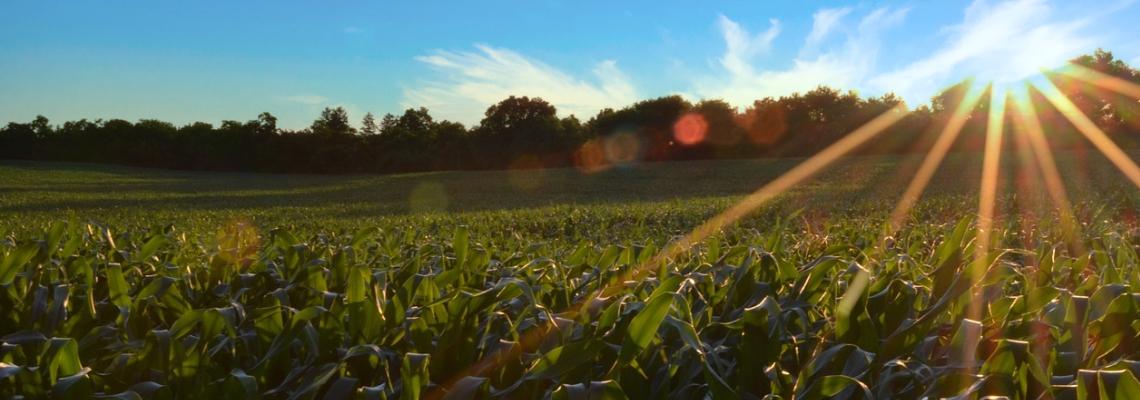 Cultivar alimentos es cosechar Paz